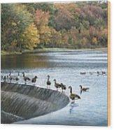 Dam Geese Wood Print