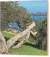 Dana Point Harbor Channel Wood Print