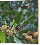 Dance Of The Butterflies Wood Print