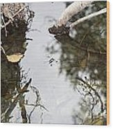 Dance Of The Water Spider Wood Print