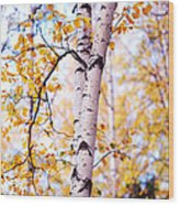 Dancing Birches Wood Print
