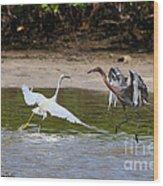 Dancing Egrets Wood Print