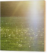 Dandelion And Meadows In Back-light Wood Print