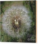 Dandelion Going To Seed Wood Print