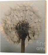 Dandelion In Backlight Wood Print