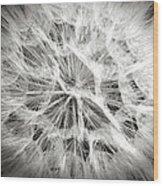 Dandelion In Black And White Wood Print