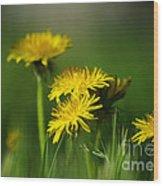 Dandelion Magic Wood Print