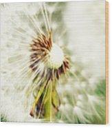 Dandelion No2 Wood Print