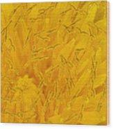 Dandelion Up Close Wood Print