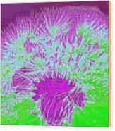 Dandilion Colorized I Wood Print