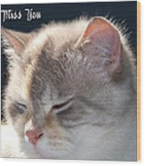 Daphne Cat Miss You Wood Print
