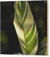 Dappled Ginger Leaf Wood Print