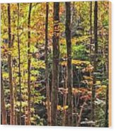 Dappled Sun On Fall Colors Wood Print