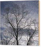 Dark And Stromy Night Trees Wood Print