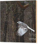 Dark-eyed Junco In Flight Wood Print