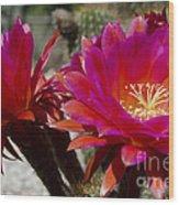 Dark Pink Cactus Flowers Wood Print