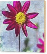 Dark Pink Dahlia On Blue Wood Print