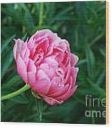 Dark Pink Peony Flower Series 2 Wood Print
