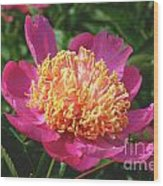 Dark Pink Peony Flower Series 3 Wood Print