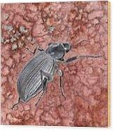 Darkling Beetle Wood Print