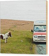 Dartmoor Pony Fancies An Ice Cream Wood Print
