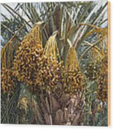 Date Palm In Fruit Wood Print