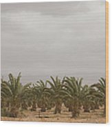 Date Palm Trees In An Orchard Wood Print