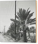 Date Palms On A Country Road Wood Print