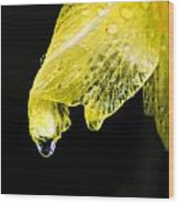 Day Lilly Drop Wood Print
