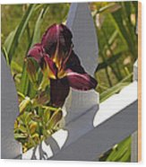 Day Lily And White Fence II Wood Print