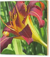 Day Lily Red And Yellow Wood Print