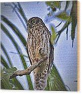 Daylight Shy V2 Wood Print