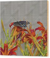 Daylily Butterfly Wood Print