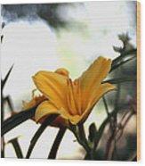 Daylily Sparkle Wood Print