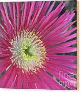 Dazzling Daisy Wood Print