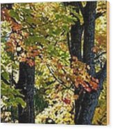 Dazzling Days Of Autumn Wood Print