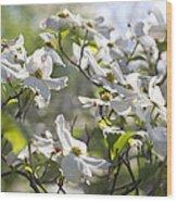 Dazzling Sunlit White Spring Dogwood Blossoms Wood Print