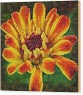 Dazzling Zinnia Wood Print