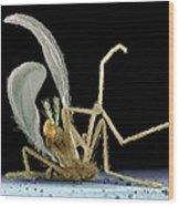 Dead Fly From Car Headlamp, Sem Wood Print