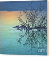 Dead Sea - Withered Bush At Dawn Wood Print