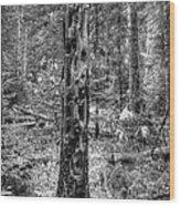 Dead Snag Wood Print