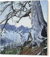 Dead Spruce In Old Forest Fire, Nabob Wood Print