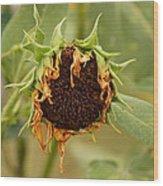 Dead Sunflower Wood Print