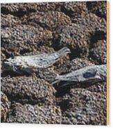 Salton Sea Dead Tilapia Wood Print