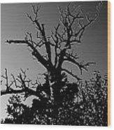 Dead Tree II Wood Print