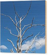 Dead Wood Wood Print
