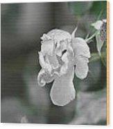 Death Of A Flower Wood Print