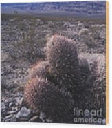 Death Valley Cactus Wood Print