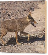 Death Valley Coyote Wood Print
