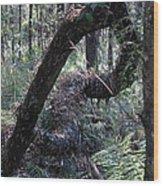 Decaying Tree Wood Print